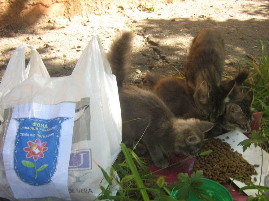 Мариупольцы накормили бездомных собак и кошек в Краматорске (ФОТО), фото-5