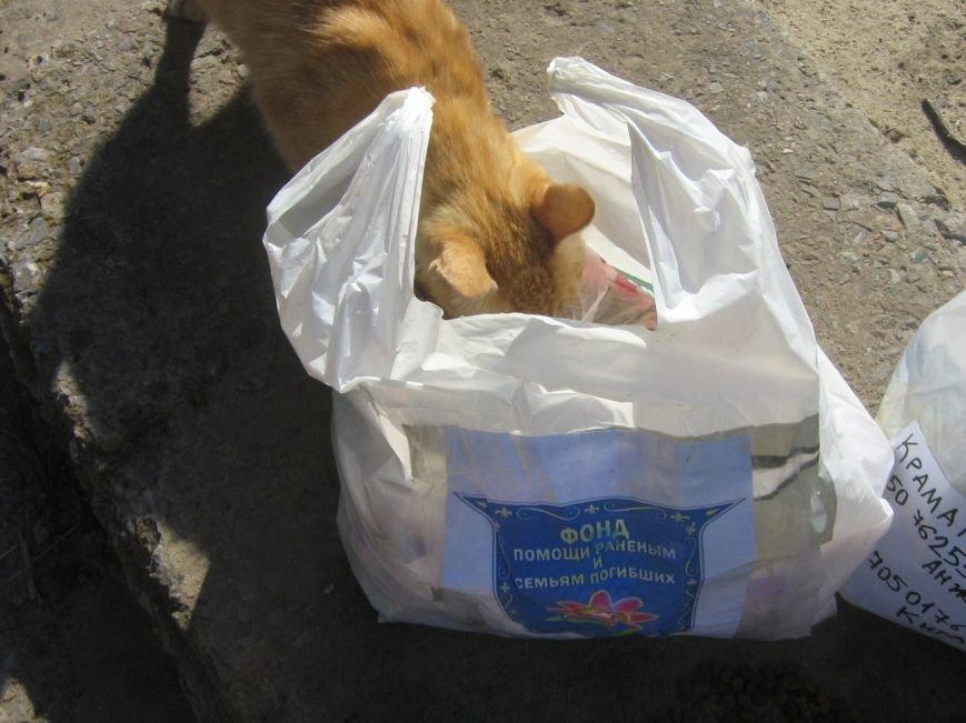Мариупольцы накормили бездомных собак и кошек в Краматорске (ФОТО), фото-2