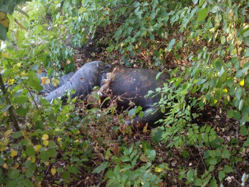 В Донецке в посадке уже две недели лежит труп боевика (ФОТО), фото-2