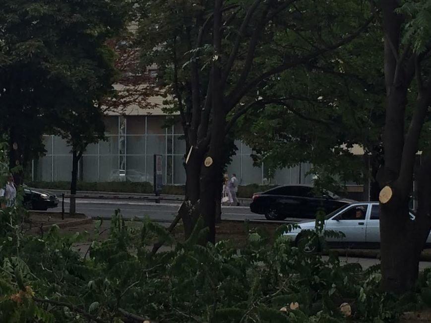 В Мариуполе деревья обрезали ради удобства охраны Гипромеза (Фотофакт), фото-2