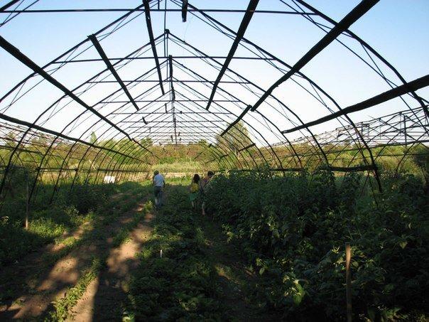 Катлинский плодово-ягодный питомник, выселение, Захар Смушкин, петиция, Агротехнология