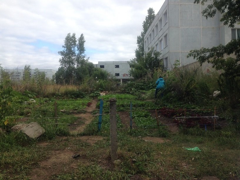 Вьетнамские огороды в Ульяновске, фото-1