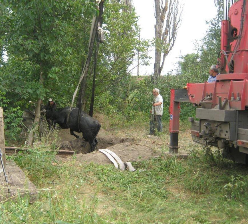 На Кировоградщине корову из ямы доставали с помощью крана (фото), фото-3