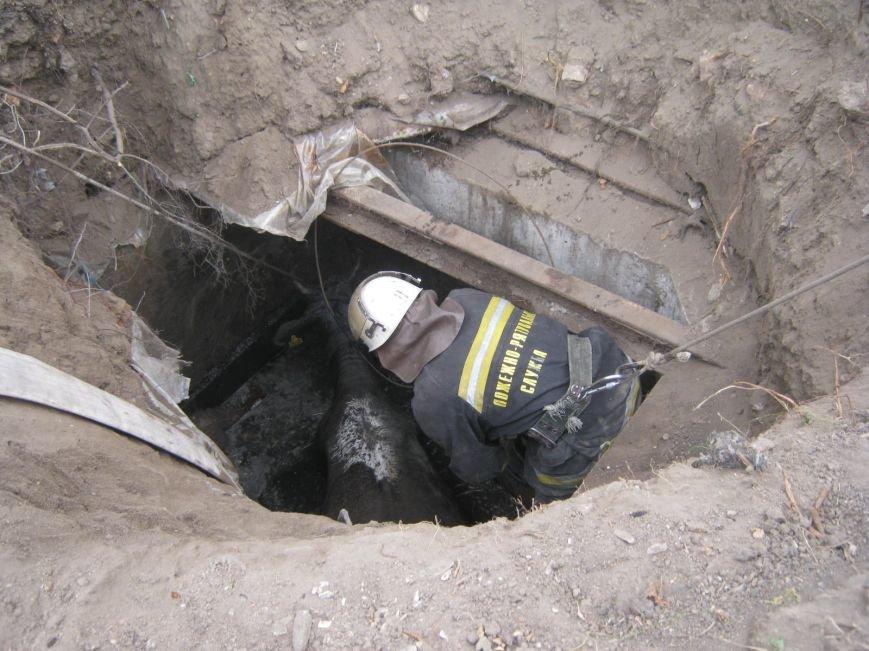 На Кировоградщине корову из ямы доставали с помощью крана (фото), фото-2