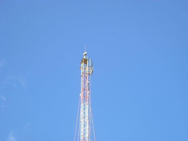 Сумська область: рятувальники перевірили забезпечення пожежної безпеки лісів (ФОТО), фото-6