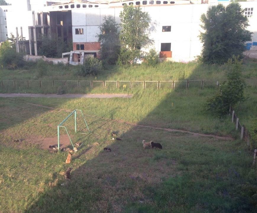 Бездомные собаки заполоняют Новый город, фото-1