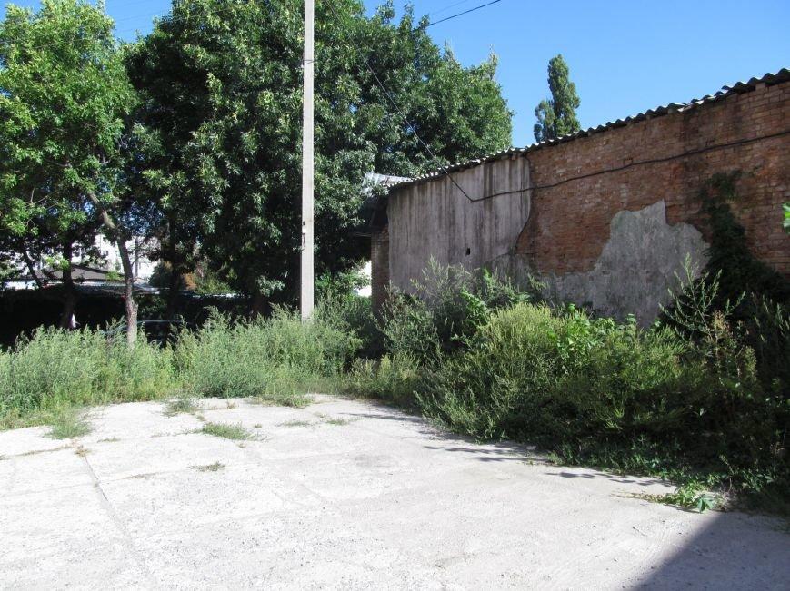 Запасайтесь Лоратадином - амброзия процветает в центре Кременчуга (ФОТО), фото-3