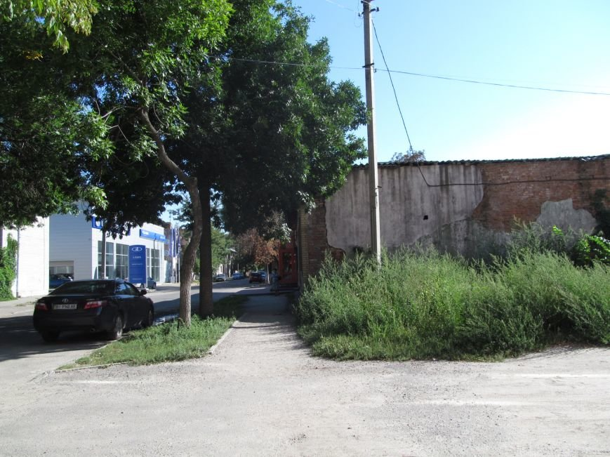 Запасайтесь Лоратадином - амброзия процветает в центре Кременчуга (ФОТО), фото-2