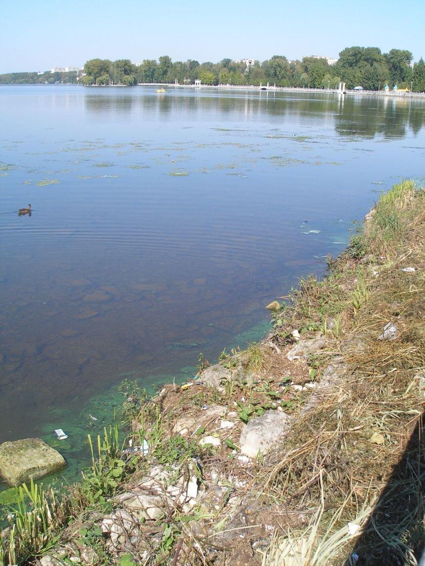 Став на болото та смітник (2)