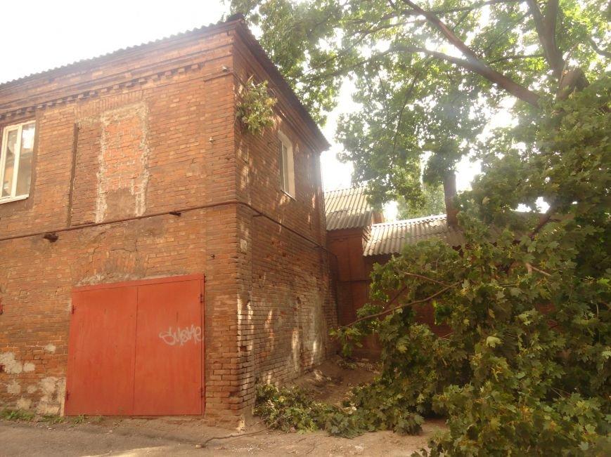 В Мариуполе клен обесточил дом (ФОТО), фото-4