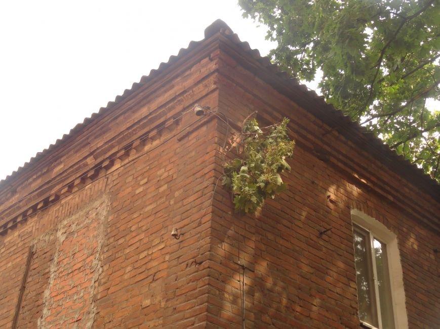 В Мариуполе клен обесточил дом (ФОТО), фото-3