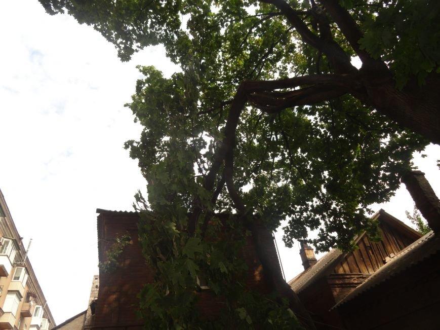 В Мариуполе клен обесточил дом (ФОТО), фото-2