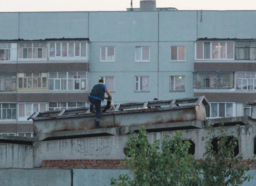 Собаки на крыше гимназии № 79, фото-2