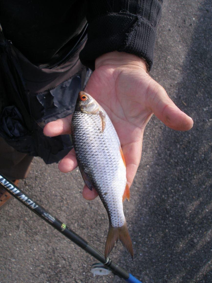 7 - Риба_(2)