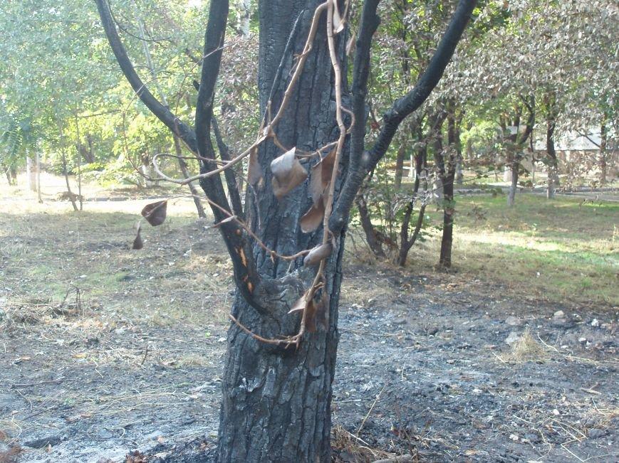 В Мариуполе сожгли деревья возле детского сада (ФОТОФАКТ), фото-2
