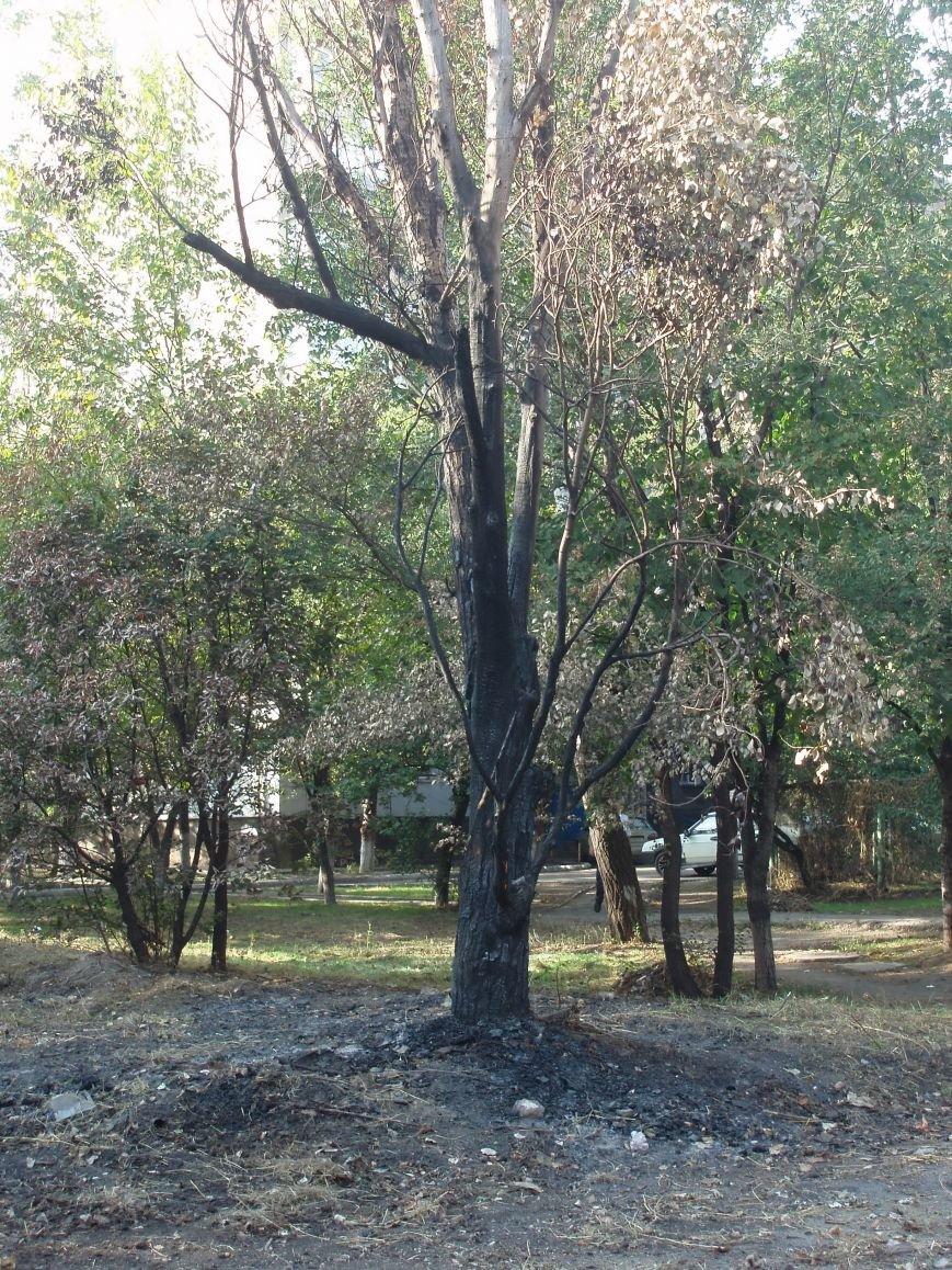 В Мариуполе сожгли деревья возле детского сада (ФОТОФАКТ), фото-1
