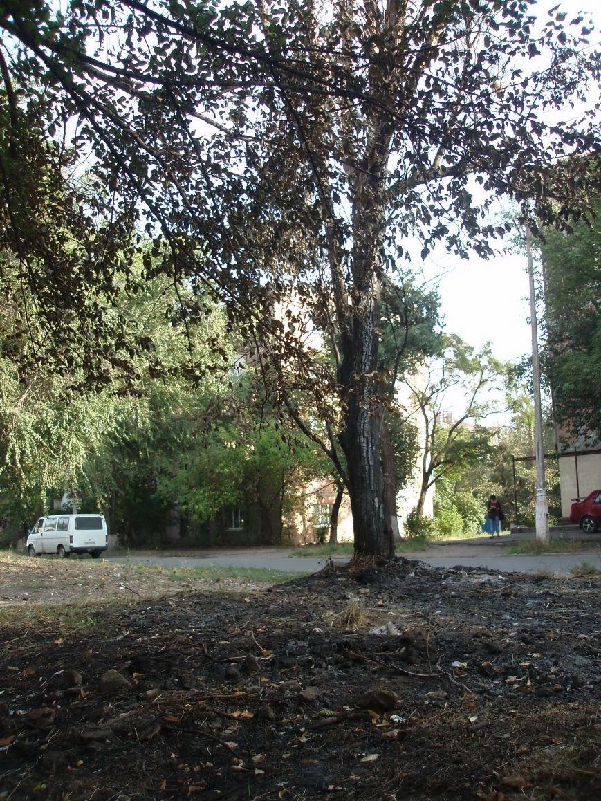 В Мариуполе сожгли деревья возле детского сада (ФОТОФАКТ), фото-4