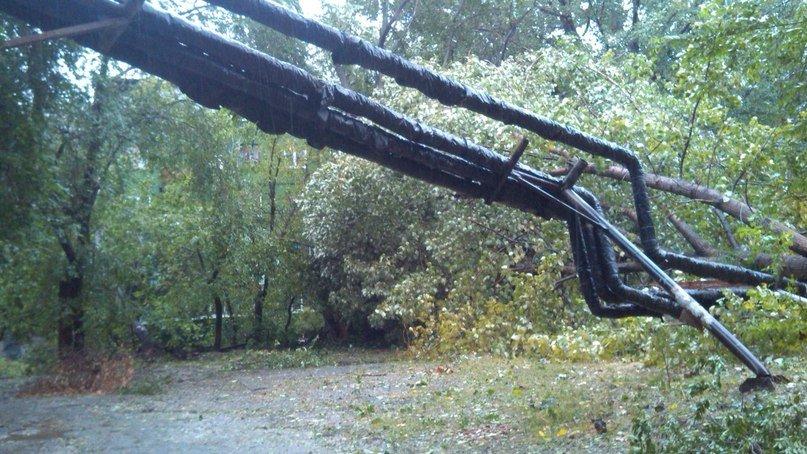 На Днепропетровск обрушился деревопад (ОБНОВЛЯЕТСЯ, ФОТО), фото-27