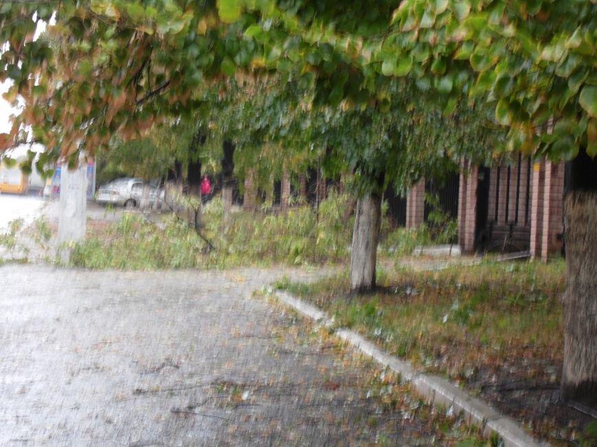 На Днепропетровск обрушился деревопад (ОБНОВЛЯЕТСЯ, ФОТО), фото-10