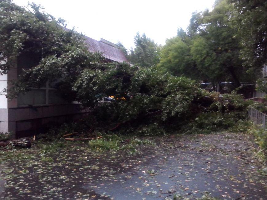 На Днепропетровск обрушился деревопад (ОБНОВЛЯЕТСЯ, ФОТО), фото-22