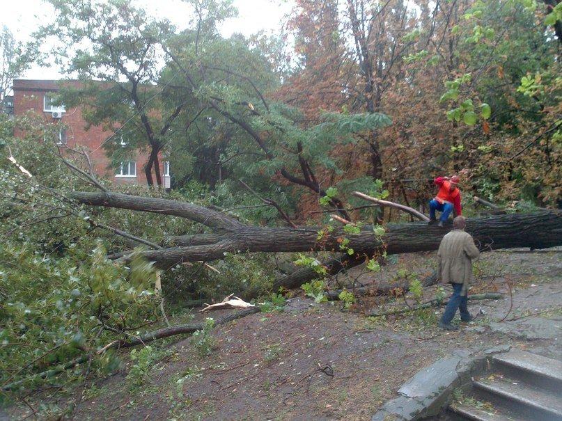 На Днепропетровск обрушился деревопад (ОБНОВЛЯЕТСЯ, ФОТО), фото-2