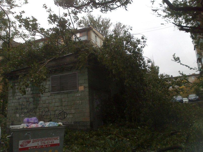На Днепропетровск обрушился деревопад (ОБНОВЛЯЕТСЯ, ФОТО), фото-8