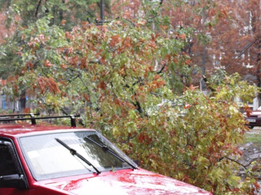 На Днепропетровск обрушился деревопад (ОБНОВЛЯЕТСЯ, ФОТО), фото-13