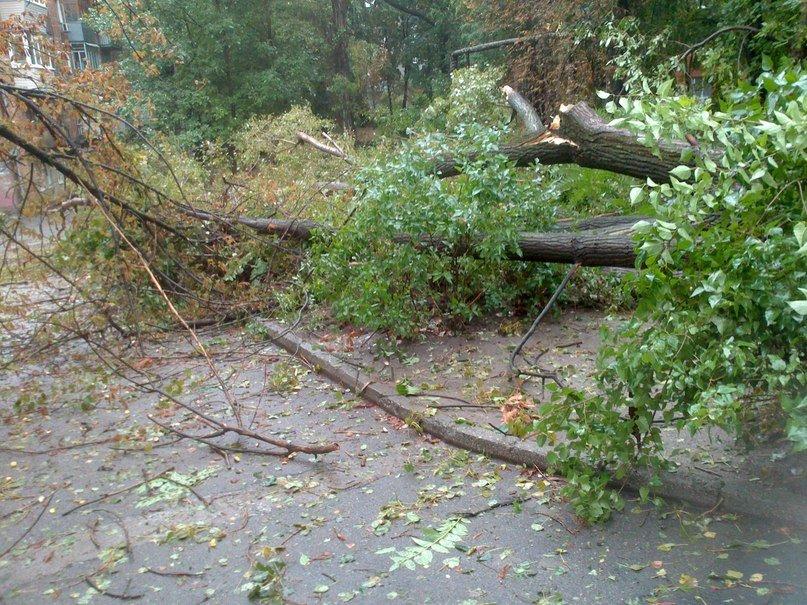 На Днепропетровск обрушился деревопад (ОБНОВЛЯЕТСЯ, ФОТО), фото-1