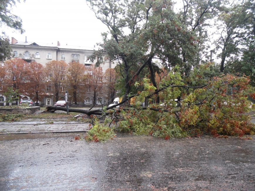 На Днепропетровск обрушился деревопад (ОБНОВЛЯЕТСЯ, ФОТО), фото-14