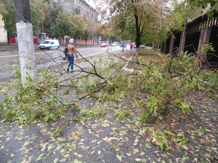 На Днепропетровск обрушился деревопад (ОБНОВЛЯЕТСЯ, ФОТО), фото-11