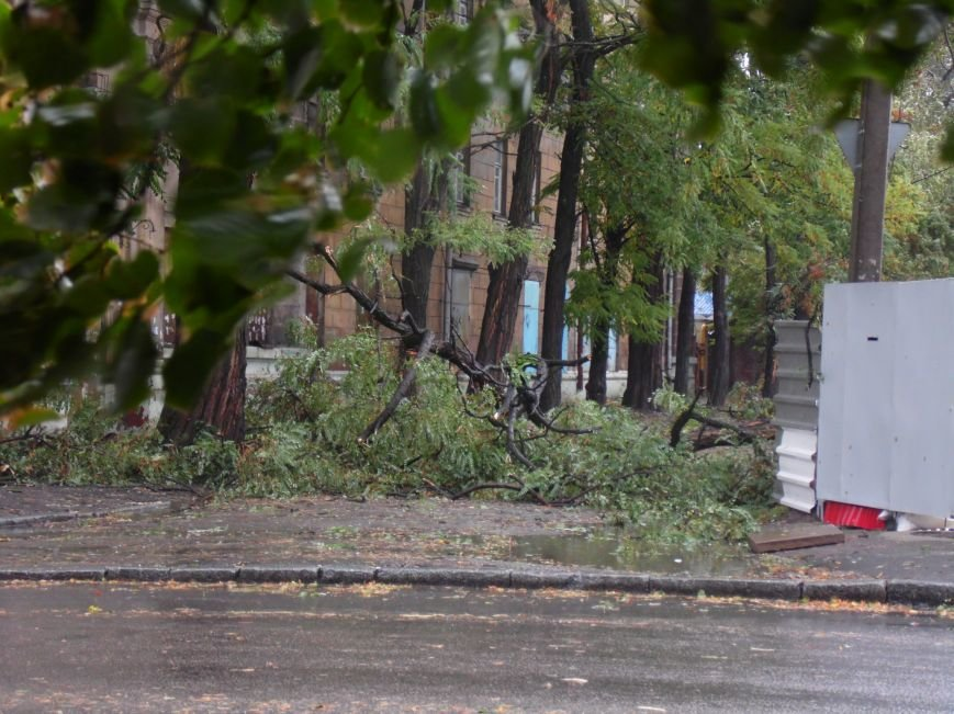 На Днепропетровск обрушился деревопад (ОБНОВЛЯЕТСЯ, ФОТО), фото-12