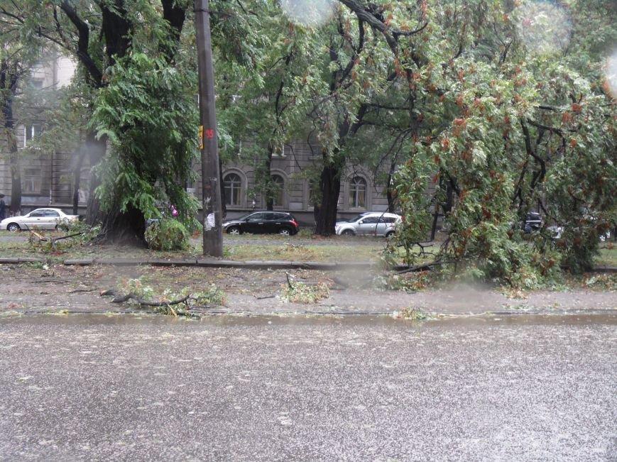 На Днепропетровск обрушился деревопад (ОБНОВЛЯЕТСЯ, ФОТО), фото-20