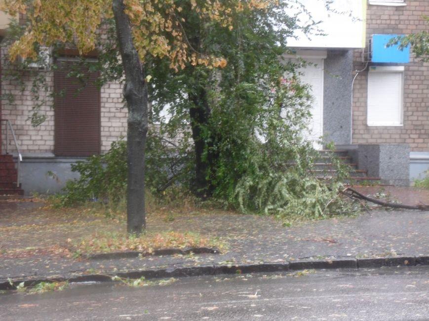 На Днепропетровск обрушился деревопад (ОБНОВЛЯЕТСЯ, ФОТО), фото-9