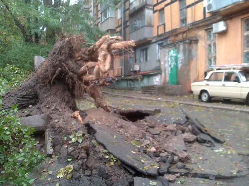 На Днепропетровск обрушился деревопад (ОБНОВЛЯЕТСЯ, ФОТО), фото-4