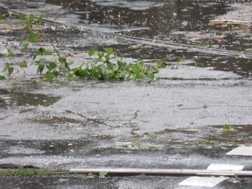 На Днепропетровск обрушился деревопад (ОБНОВЛЯЕТСЯ, ФОТО), фото-17