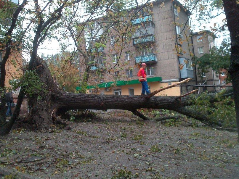 На Днепропетровск обрушился деревопад (ОБНОВЛЯЕТСЯ, ФОТО), фото-3