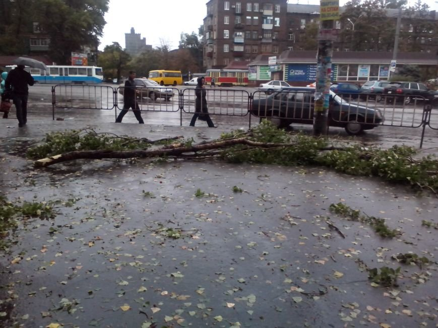 На Днепропетровск обрушился деревопад (ОБНОВЛЯЕТСЯ, ФОТО), фото-24