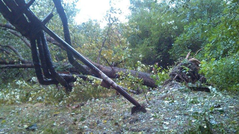 На Днепропетровск обрушился деревопад (ОБНОВЛЯЕТСЯ, ФОТО), фото-26