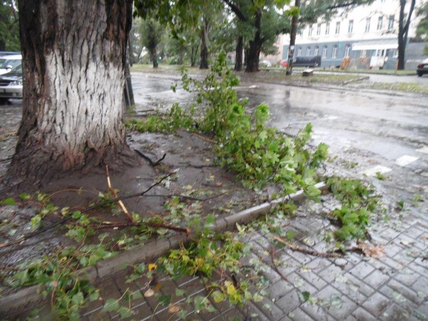 На Днепропетровск обрушился деревопад (ОБНОВЛЯЕТСЯ, ФОТО), фото-18