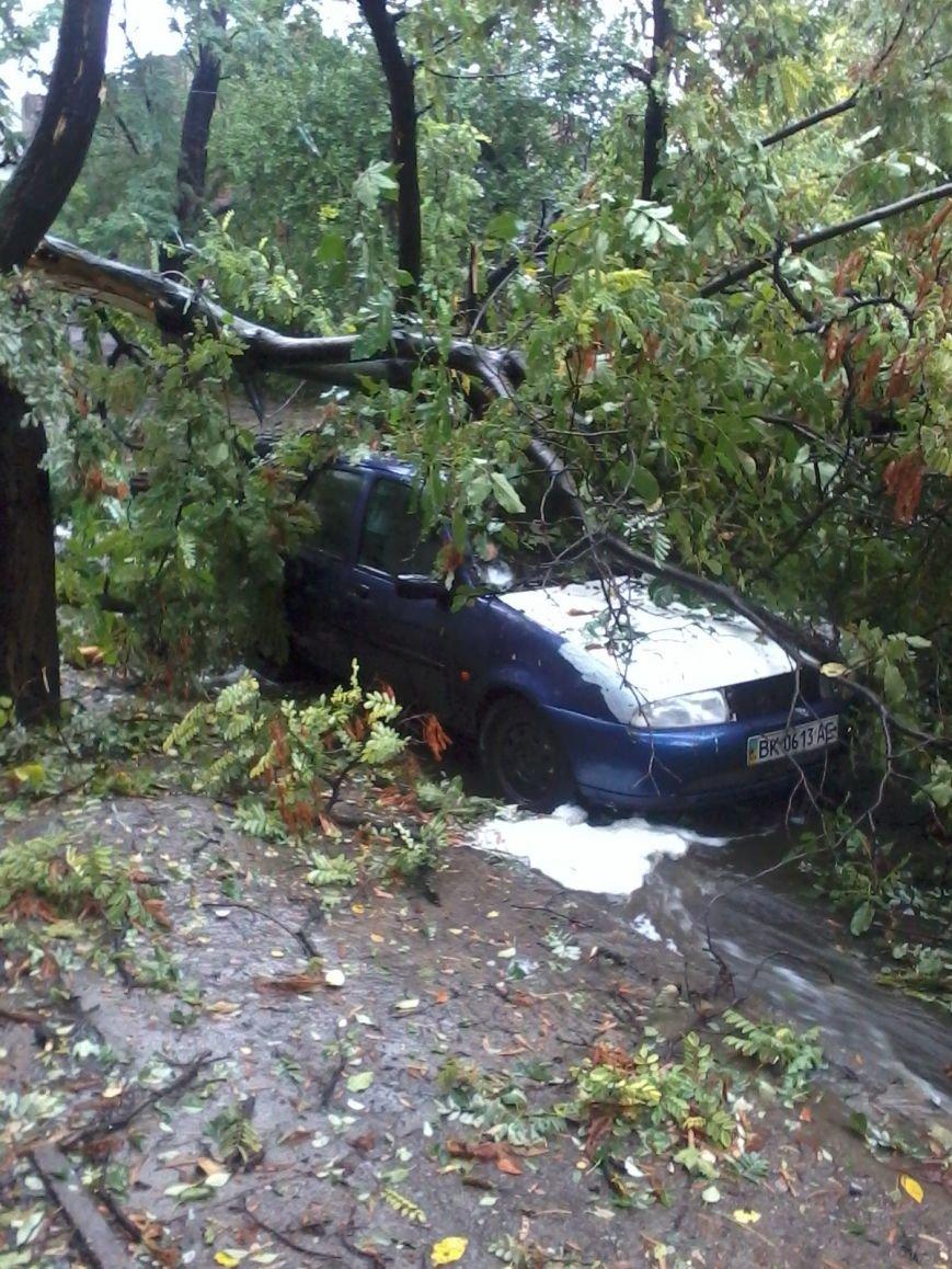 На Днепропетровск обрушился деревопад (ОБНОВЛЯЕТСЯ, ФОТО), фото-21