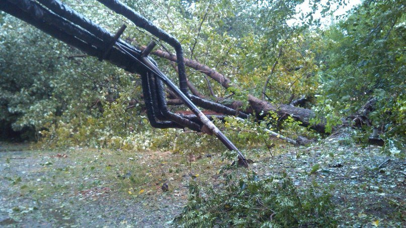 На Днепропетровск обрушился деревопад (ОБНОВЛЯЕТСЯ, ФОТО), фото-25