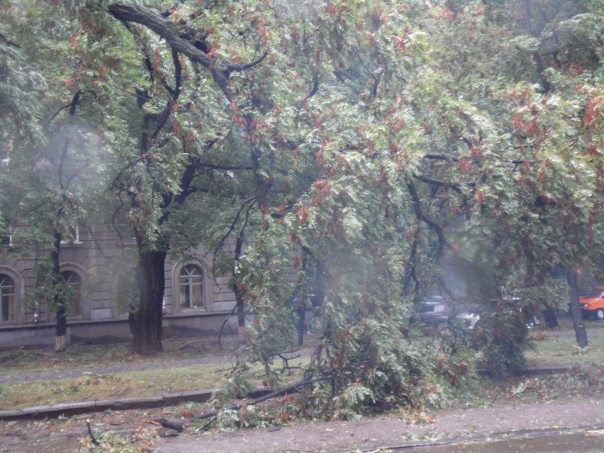 На Днепропетровск обрушился деревопад (ОБНОВЛЯЕТСЯ, ФОТО), фото-19