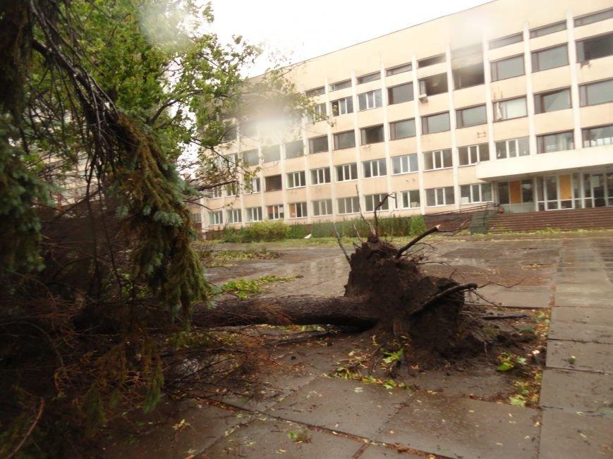На Административной площади в Мариуполе не выстояли ели (ФОТО), фото-1