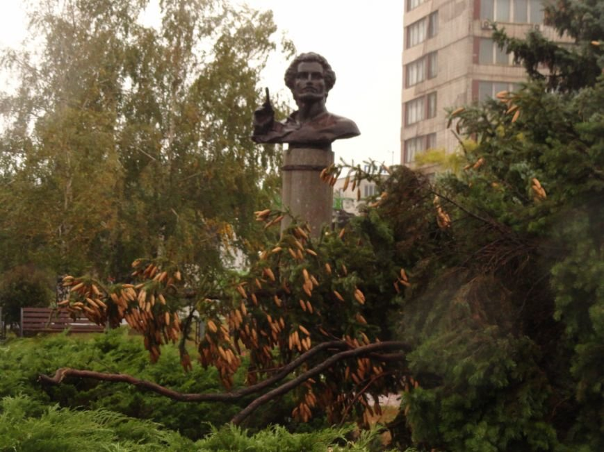 На Административной площади в Мариуполе не выстояли ели (ФОТО), фото-6