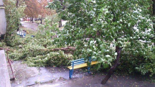 Осторожно - падающие деревья! (ФОТО), фото-5