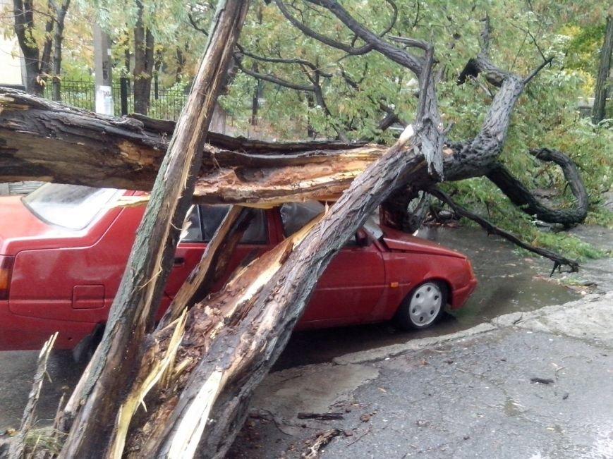Осторожно - падающие деревья! (ФОТО), фото-7