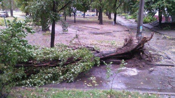 Осторожно - падающие деревья! (ФОТО), фото-4