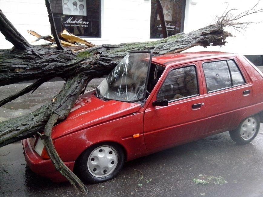 Осторожно - падающие деревья! (ФОТО), фото-3