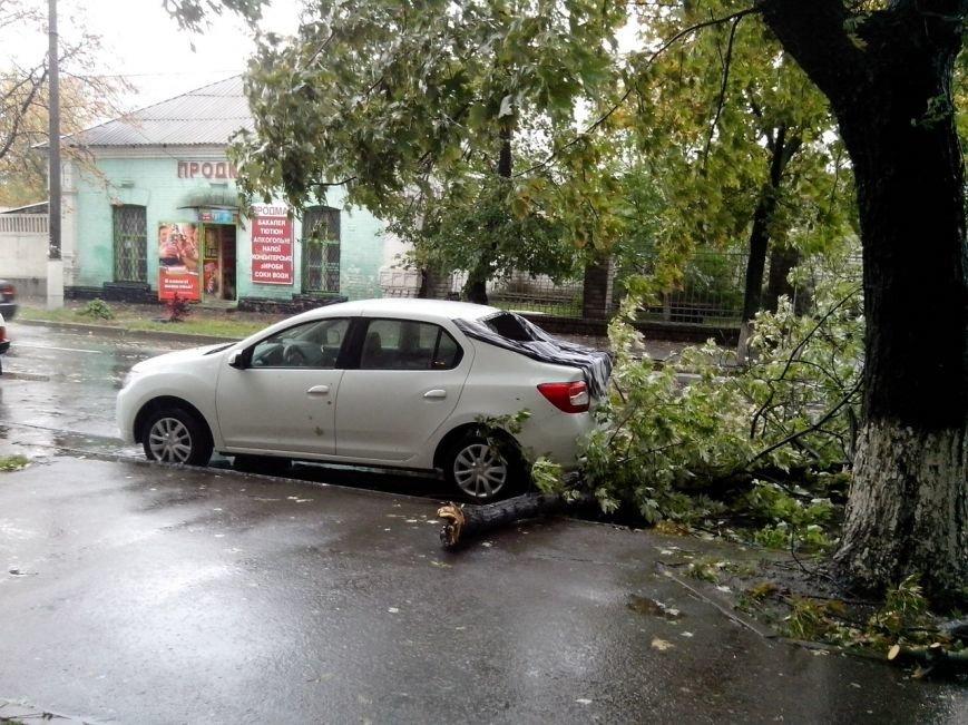 Осторожно - падающие деревья! (ФОТО), фото-6
