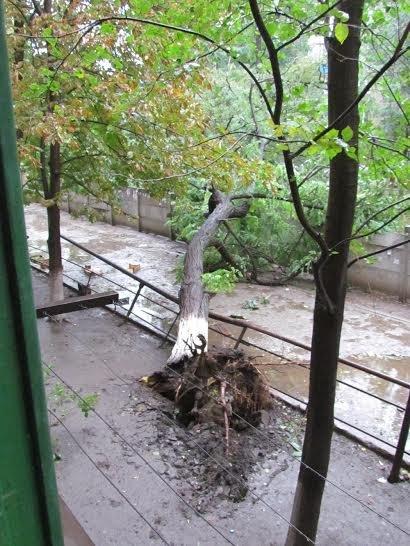 Бульвар Шевченко в Мариуполе тоже пострадал от бури (ФОТОРЕПОРТАЖ), фото-2